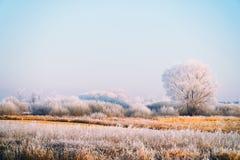 Ängar, buskar och träd som täckas med sagolikt vinterlandskap för frost fotografering för bildbyråer