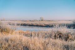 Ängar, buskar och träd som täckas med sagolikt vinterlandskap för frost royaltyfri fotografi