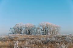 Ängar, buskar och träd som täckas med sagolikt vinterlandskap för frost arkivbild
