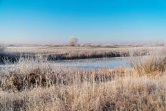 Ängar, buskar och träd som täckas med sagolikt vinterlandskap för frost royaltyfri bild