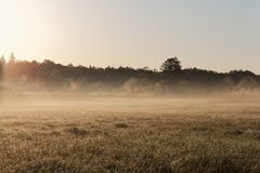 Ängar i den Bialowieza nationalparken i Polen royaltyfria foton