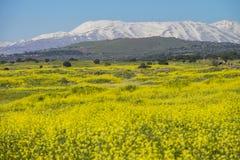 Ängar i Golan Heights och hermonmontering på backgounden arkivbild