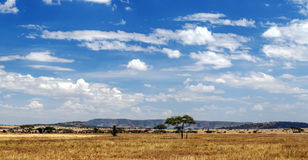 Ängar i Tanzania royaltyfri fotografi