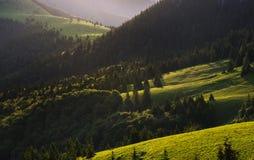 Ängar och skogar av Velka Fatra Arkivfoto