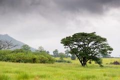 Ängar och träd i regnskogen royaltyfria bilder