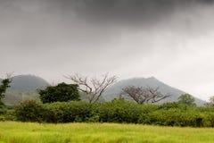 Ängar och träd i regnskogen royaltyfri bild