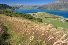 Ängar ovanför sjön Hawea arkivbild