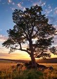 ängberg över solnedgång Royaltyfri Bild