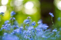 Ängblått blommar i skog Arkivbild