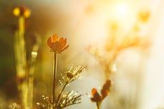 Ängblomma Royaltyfria Bilder