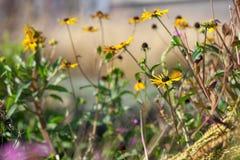 Ängblommaträdgård Royaltyfri Foto