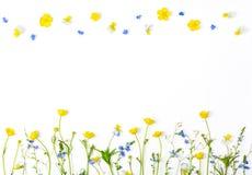 Ängblommor med fältsmörblommor och pansies som isoleras på vit bakgrund Bästa sikt med kopieringsutrymme Arkivbild