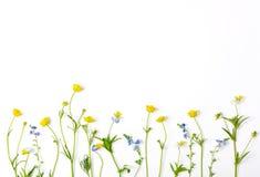 Ängblommor med fältsmörblommor och pansies som isoleras på vit bakgrund Top beskådar Lekmanna- lägenhet Arkivfoto