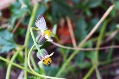 Ängblommor och fjäril, suddighetsbakgrund Arkivbilder