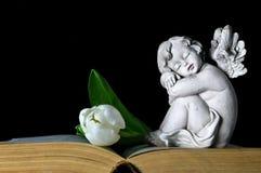 Ängel- och vittulpan Arkivbilder