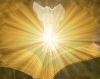 Ängel på den öppna tända bibeln Arkivbilder