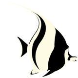 ängelfisk Royaltyfri Fotografi
