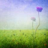 Ängen blommar bakgrund Arkivfoto