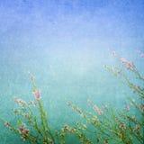 Ängen blommar bakgrund Arkivbilder