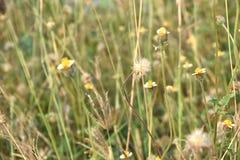 Ängen blommar bakgrundslandskap, fält & ängar Arkivfoton
