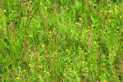 Ängen blommar i det gröna gräset Royaltyfri Fotografi