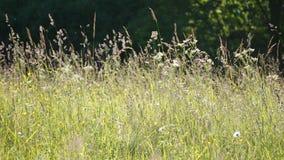 Ängen blommar i sommaren Arkivbilder