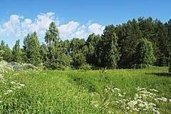 Ängen blommar mot en bakgrund av träd Arkivbilder