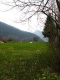 Ängen med prydligt och mejat gräs med blommor, i bakgrunden där är några hus och kullar Grön intakt natur Vägnollan royaltyfria bilder