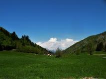 Ängen med prydligt och mejat gräs med blommor, i bakgrunden där är några hus och kullar Grön intakt natur Vägnollan fotografering för bildbyråer