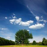 Ängen och trädet Royaltyfri Fotografi