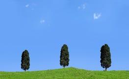 ängen sörjer trees Royaltyfria Foton
