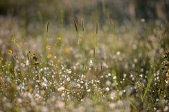 Änggräs och blommor Arkivfoto