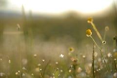 Änggräs och blommor Arkivfoton