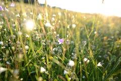 Änggräs och blommor Arkivbilder