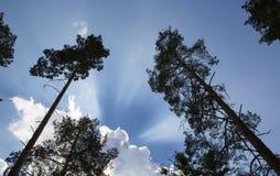 Änglalika ljus i himlen Fotografering för Bildbyråer