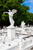 Änglar i kolonkyrkogården i Havana Arkivfoton