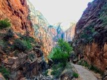 Änglar som landar slingan i Zion National Park Utah America Fotografering för Bildbyråer