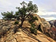 Änglar som landar slingan i Zion National Park Utah America Arkivfoto
