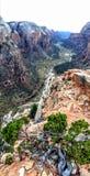 Änglar som landar slingan i Zion National Park Utah America Arkivfoton