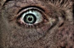 Ängstliches Auge Stockfoto