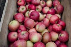 Äpfel Lizenzfreie Stockfotos