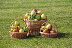 Äpfel Lizenzfreies Stockfoto
