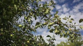 Äpfel stock video footage