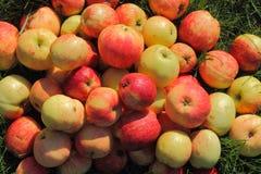 Äpfel auf dem Gras Lizenzfreies Stockbild
