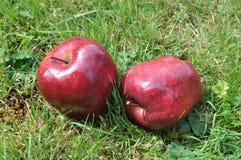 Äpfel auf dem Gras Stockbilder