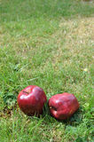 Äpfel auf dem Gras Lizenzfreies Stockfoto