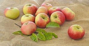 Äpfel auf einen Sack Stockbild