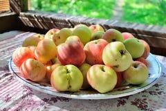 Äpfel auf einer Platte auf einer Tabelle am Dorf arbeiten im Garten Stockfoto