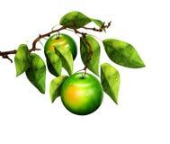 Äpfel auf Niederlassung Stockbild