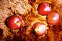 Äpfel auf Pelz Stockbilder